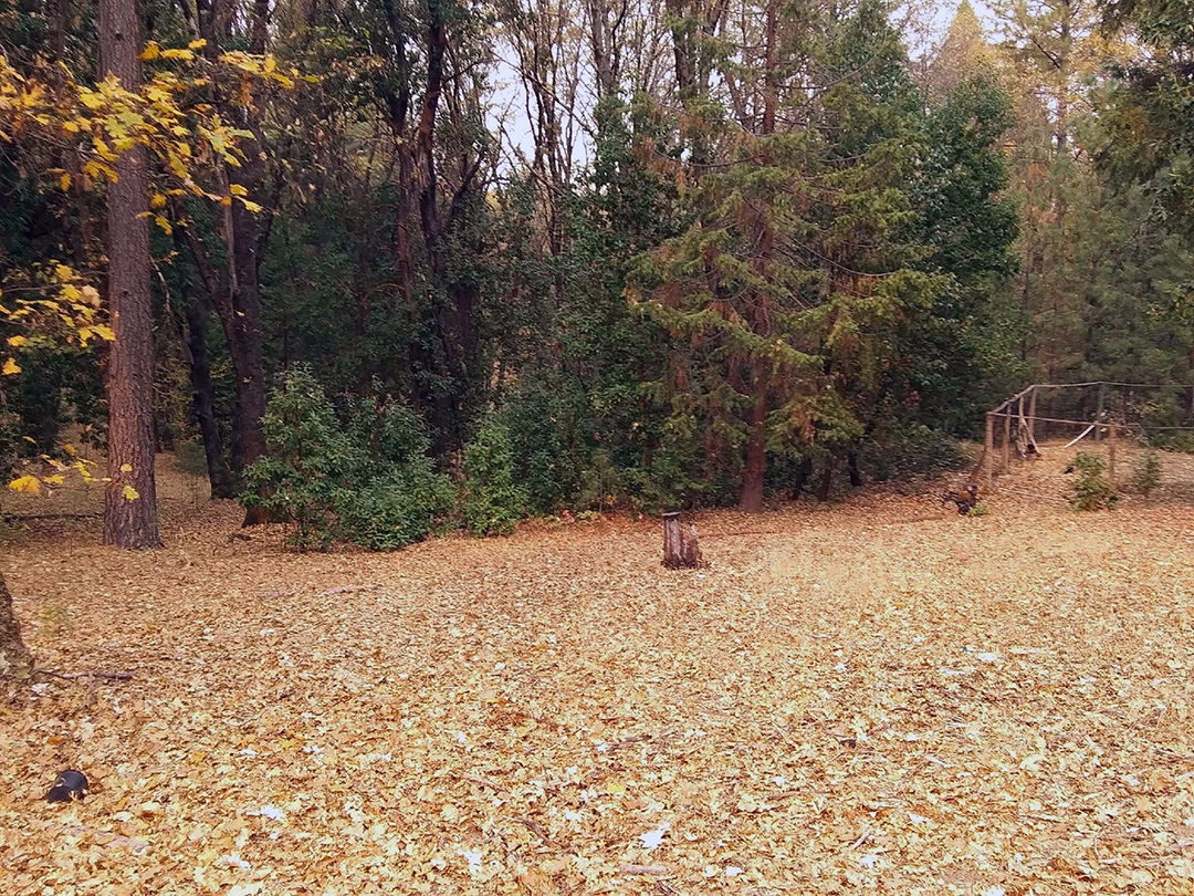Brush and shrub removal - Before